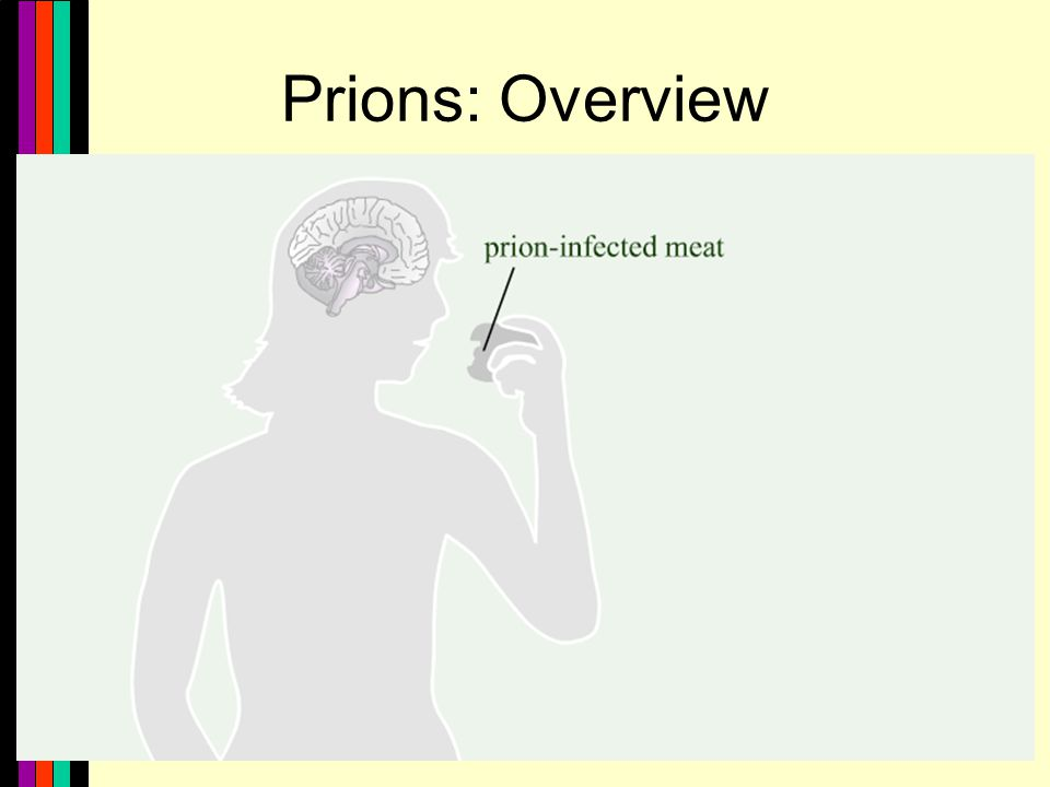 17 Prions: Overview [insert Prions_Overview.jpg ]