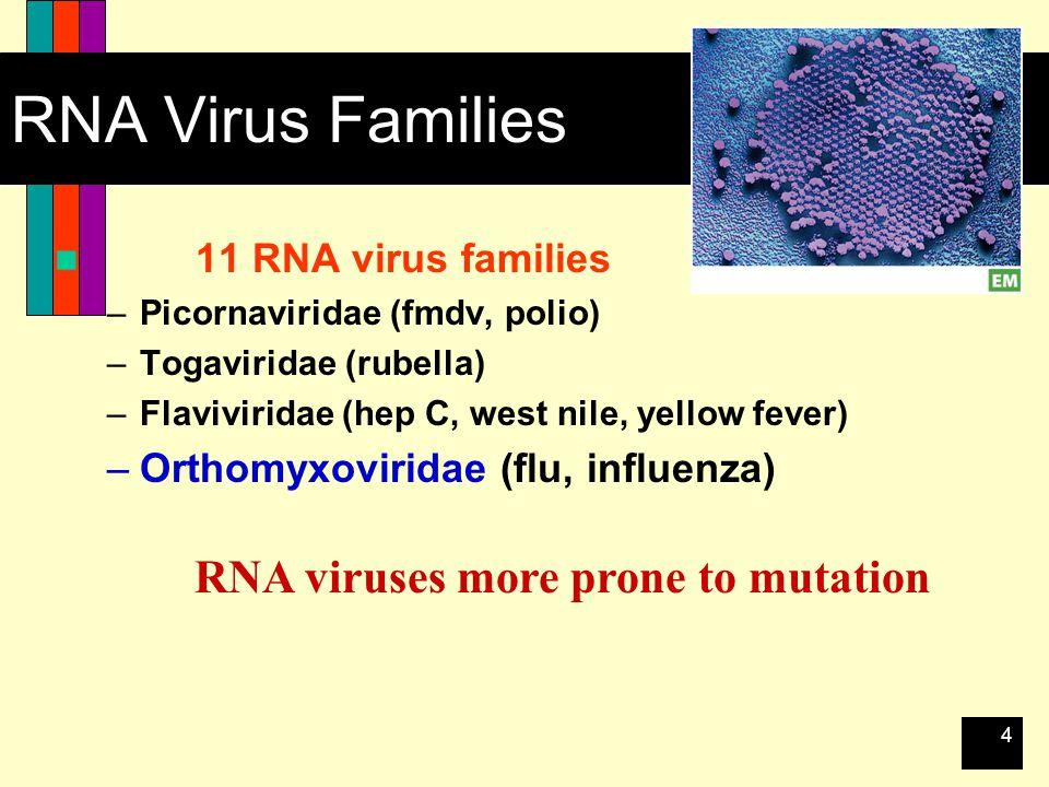 4 RNA Virus Families 11 RNA virus families –Picornaviridae (fmdv, polio) –Togaviridae (rubella) –Flaviviridae (hep C, west nile, yellow fever) –Orthomyxoviridae (flu, influenza) RNA viruses more prone to mutation