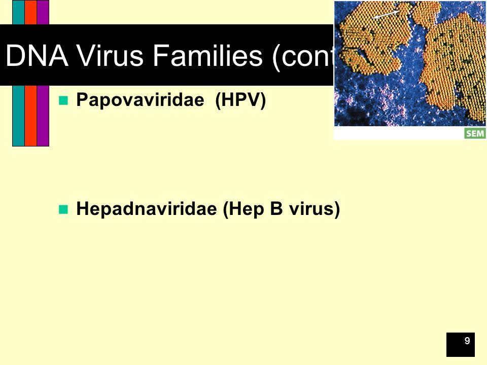 9 DNA Virus Families (cont.) Papovaviridae (HPV) Hepadnaviridae (Hep B virus)
