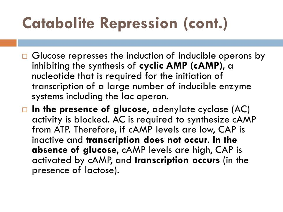 Catabolite Repression (cont.)  Glucose represses the induction of inducible operons by inhibiting the synthesis of cyclic AMP (cAMP), a nucleotide th