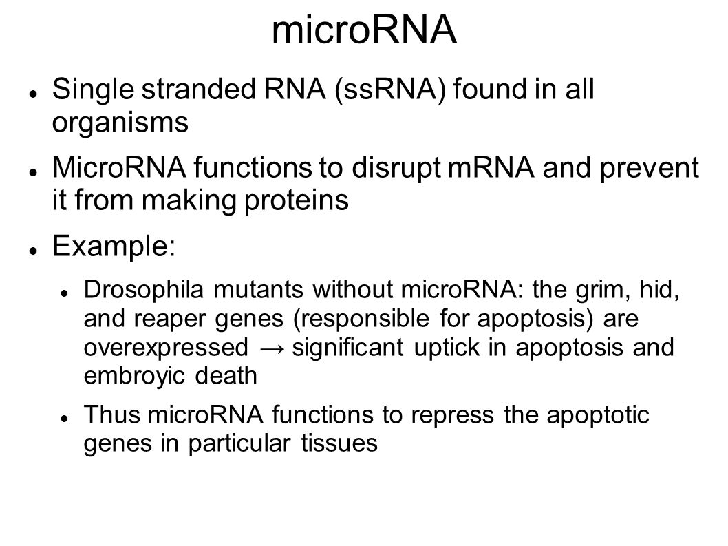 microRNA Single stranded RNA (ssRNA) found in all organisms MicroRNA functions to disrupt mRNA and prevent it from making proteins Example: Drosophila mutants without microRNA: the grim, hid, and reaper genes (responsible for apoptosis) are overexpressed → significant uptick in apoptosis and embroyic death Thus microRNA functions to repress the apoptotic genes in particular tissues