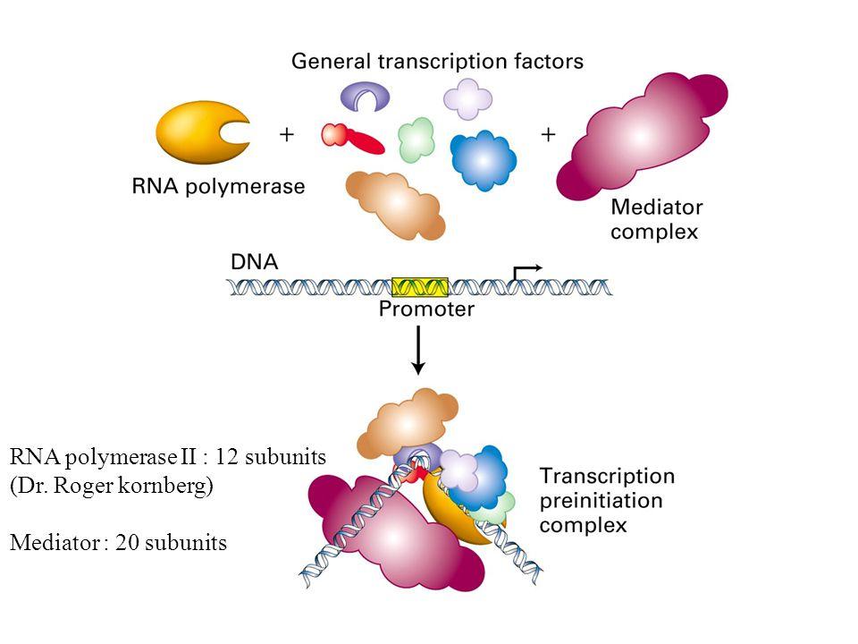 RNA polymerase II : 12 subunits (Dr. Roger kornberg) Mediator : 20 subunits
