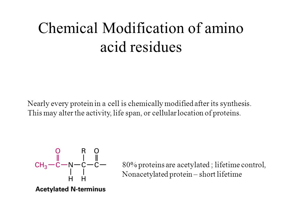 Chemical Modification of amino acid residues 80% proteins are acetylated ; lifetime control, Nonacetylated protein – short lifetime Nearly every protein in a cell is chemically modified after its synthesis.