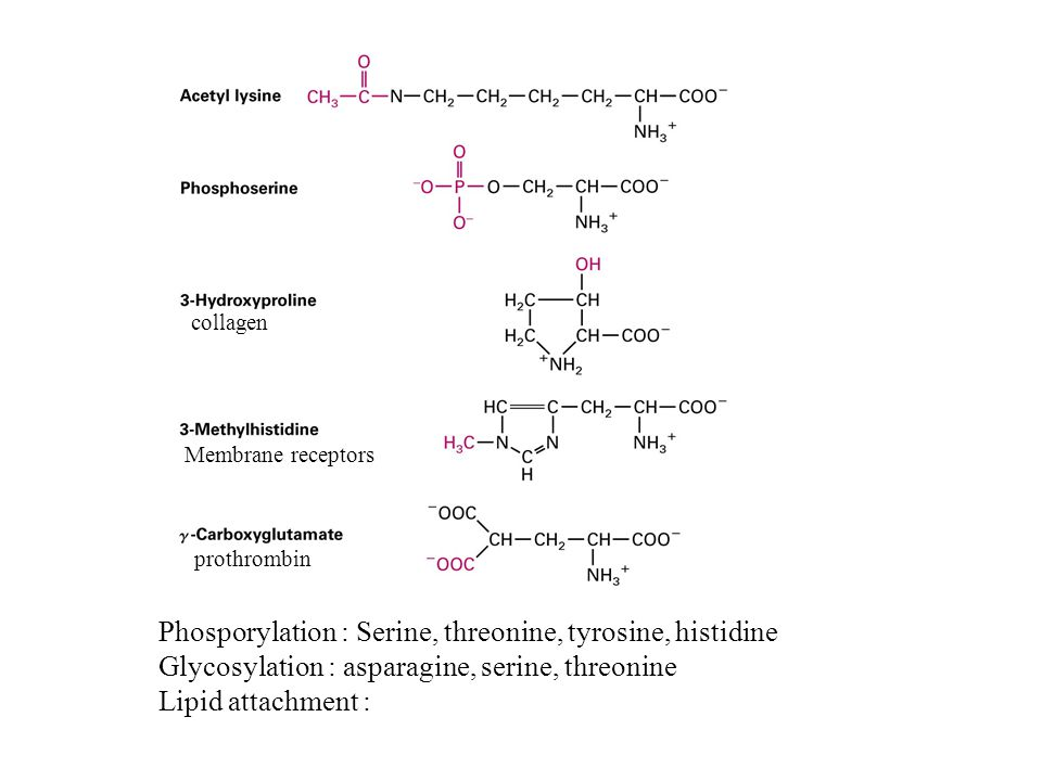 Phosporylation : Serine, threonine, tyrosine, histidine Glycosylation : asparagine, serine, threonine Lipid attachment : prothrombin Membrane receptors collagen