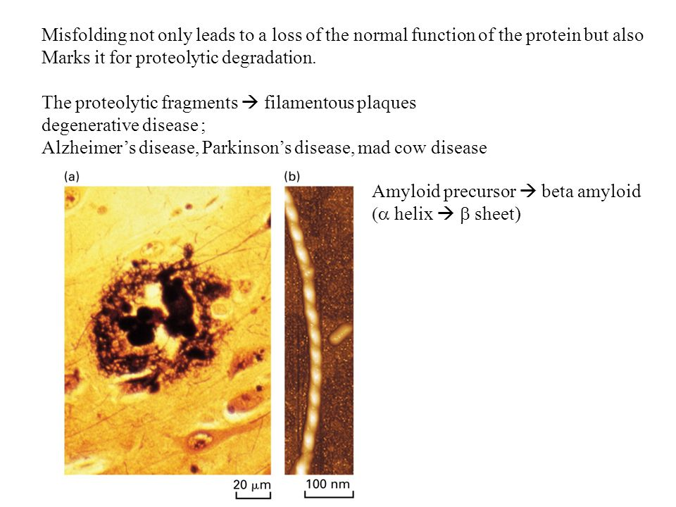 Misfolding not only leads to a loss of the normal function of the protein but also Marks it for proteolytic degradation.