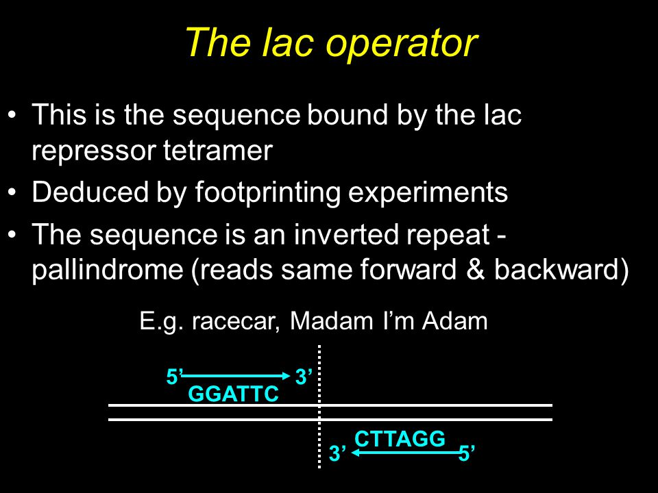 The lac operator This is the sequence bound by the lac repressor tetramer Deduced by footprinting experiments The sequence is an inverted repeat - pal