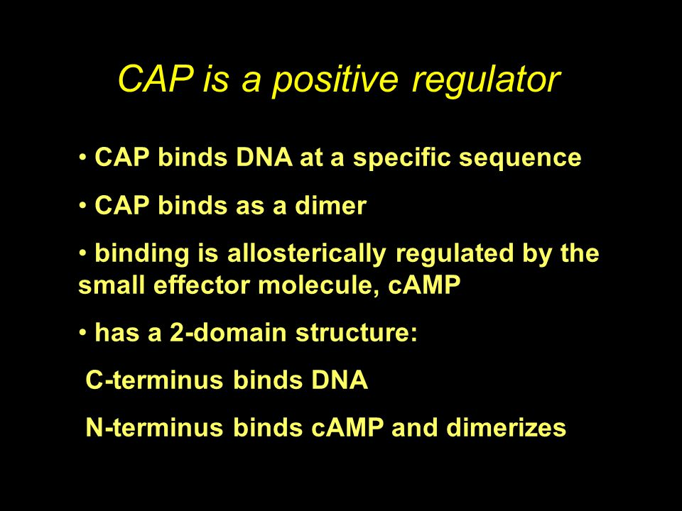 CAP is a positive regulator CAP binds DNA at a specific sequence CAP binds as a dimer binding is allosterically regulated by the small effector molecu