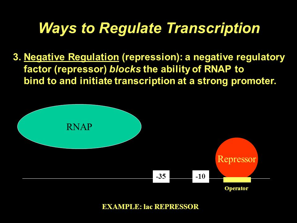 3. Negative Regulation (repression): a negative regulatory factor (repressor) blocks the ability of RNAP to bind to and initiate transcription at a st