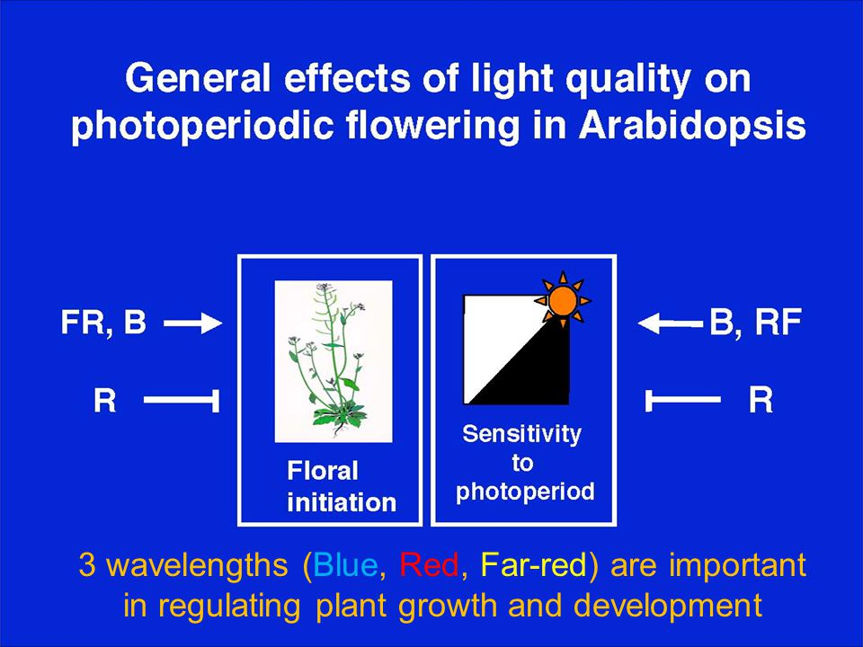 3 wavelengths (Blue, Red, Far-red) are important in regulating plant growth and development