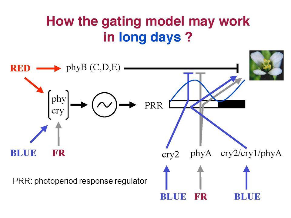 PRR: photoperiod response regulator