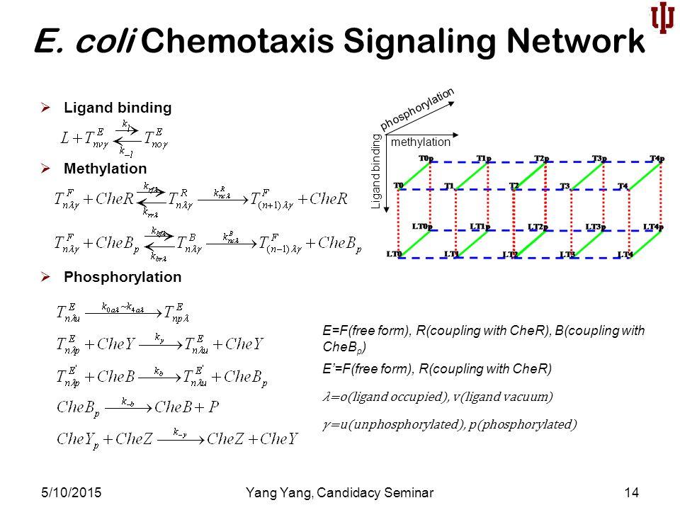 E. coli Chemotaxis Signaling Network 5/10/2015Yang Yang, Candidacy Seminar14  Ligand binding  Methylation  Phosphorylation phosphorylation methylat