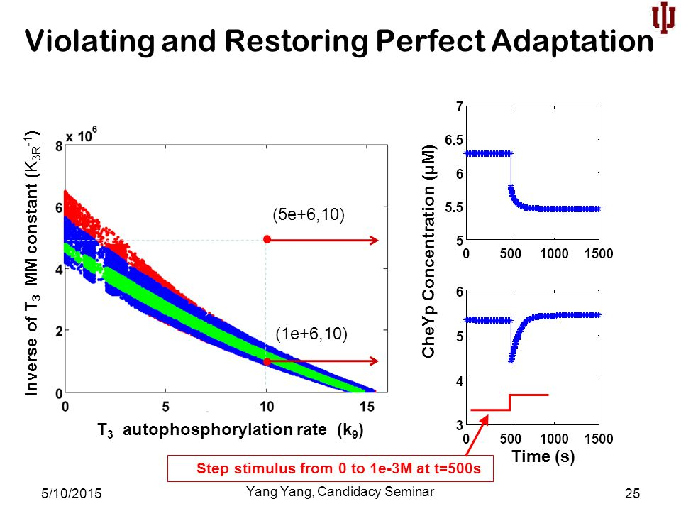 Violating and Restoring Perfect Adaptation 5/10/2015 Yang Yang, Candidacy Seminar 25 Step stimulus from 0 to 1e-3M at t=500s (5e+6,10) (1e+6,10) T 3 autophosphorylation rate (k 9 ) CheYp Concentration (µM) Inverse of T 3 MM constant (K 3R -1 ) Time (s)
