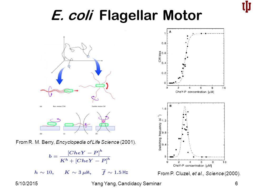 E. coli Flagellar Motor 5/10/2015Yang Yang, Candidacy Seminar6 From R.