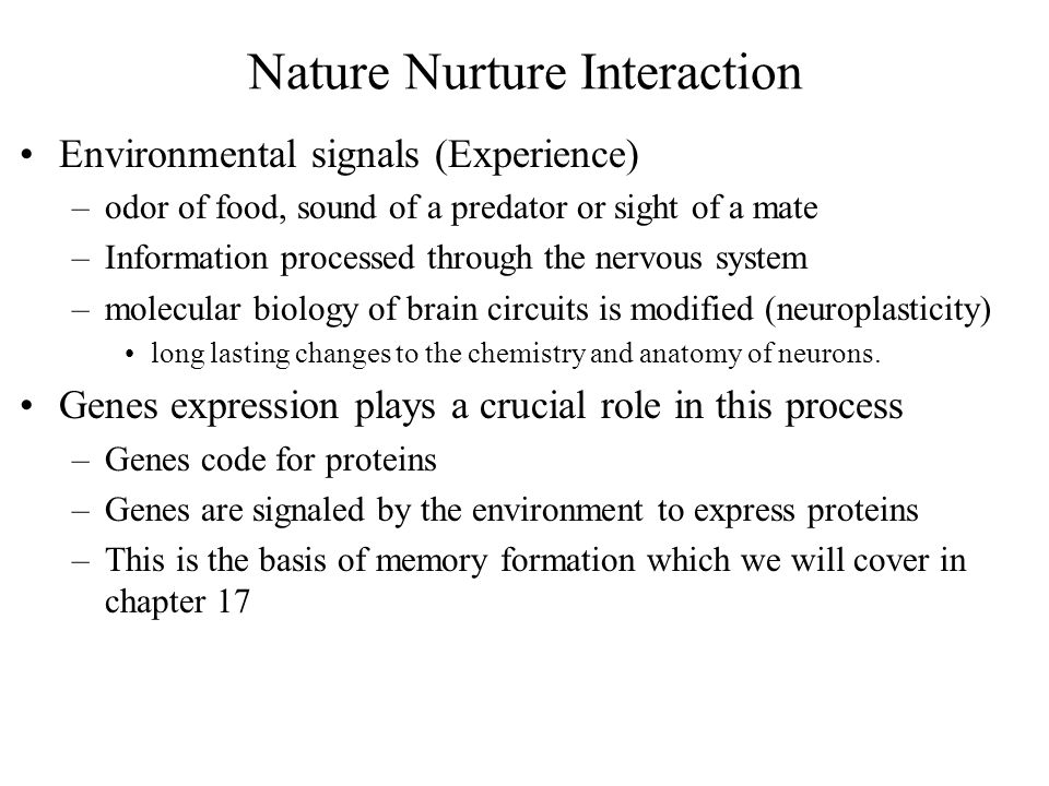 Nature Nurture Interaction Environmental signals (Experience) –odor of food, sound of a predator or sight of a mate –Information processed through the