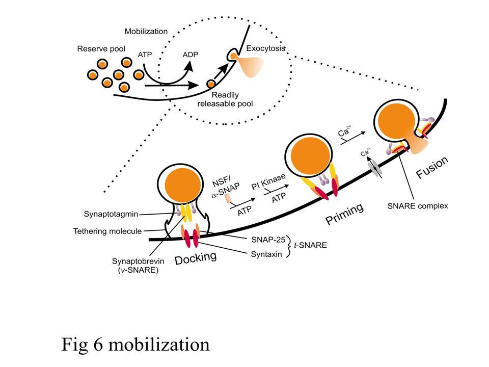 Phospholipase A 2 Cleavage Sites