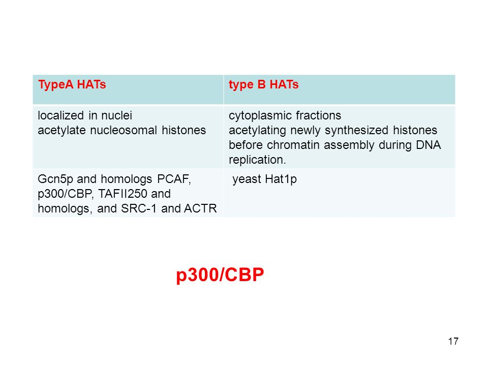 17 TypeA HATstype B HATs localized in nuclei acetylate nucleosomal histones cytoplasmic fractions acetylating newly synthesized histones before chromatin assembly during DNA replication.