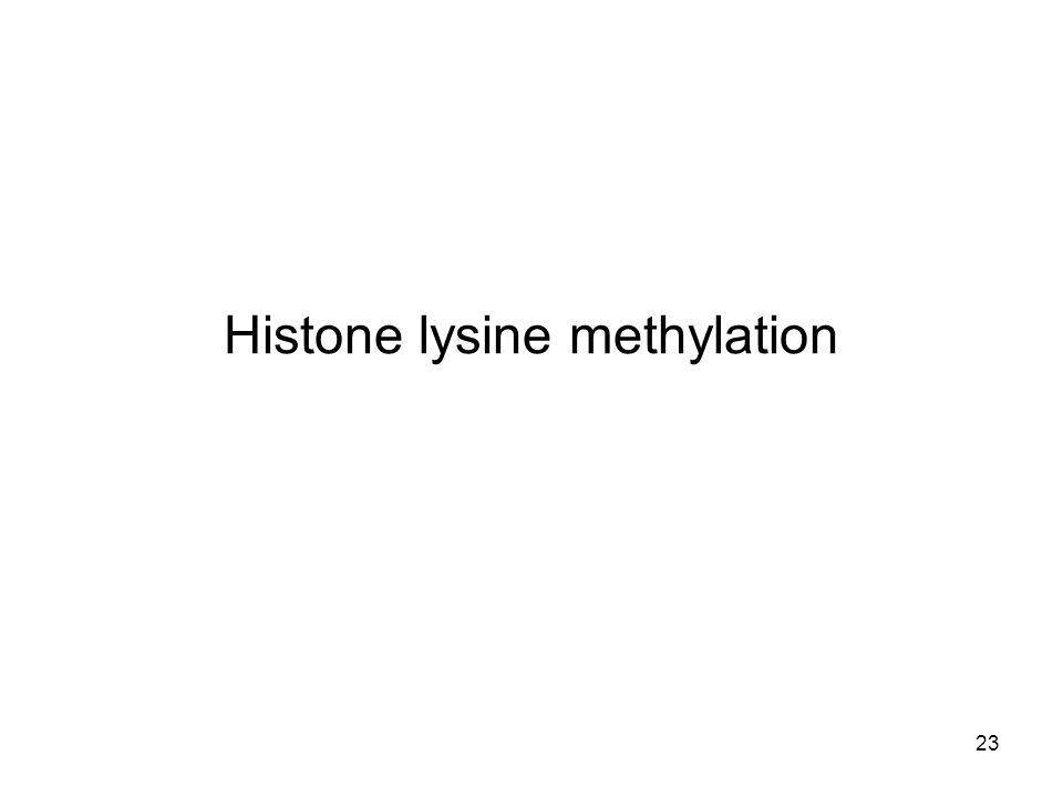 23 Histone lysine methylation