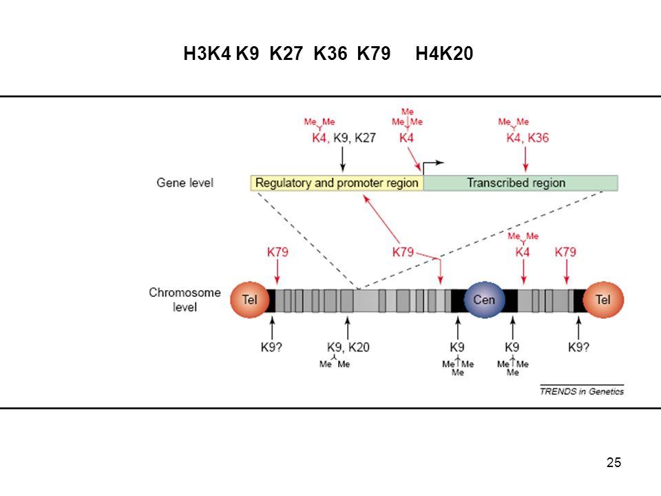 25 H3K4 K9 K27 K36 K79 H4K20