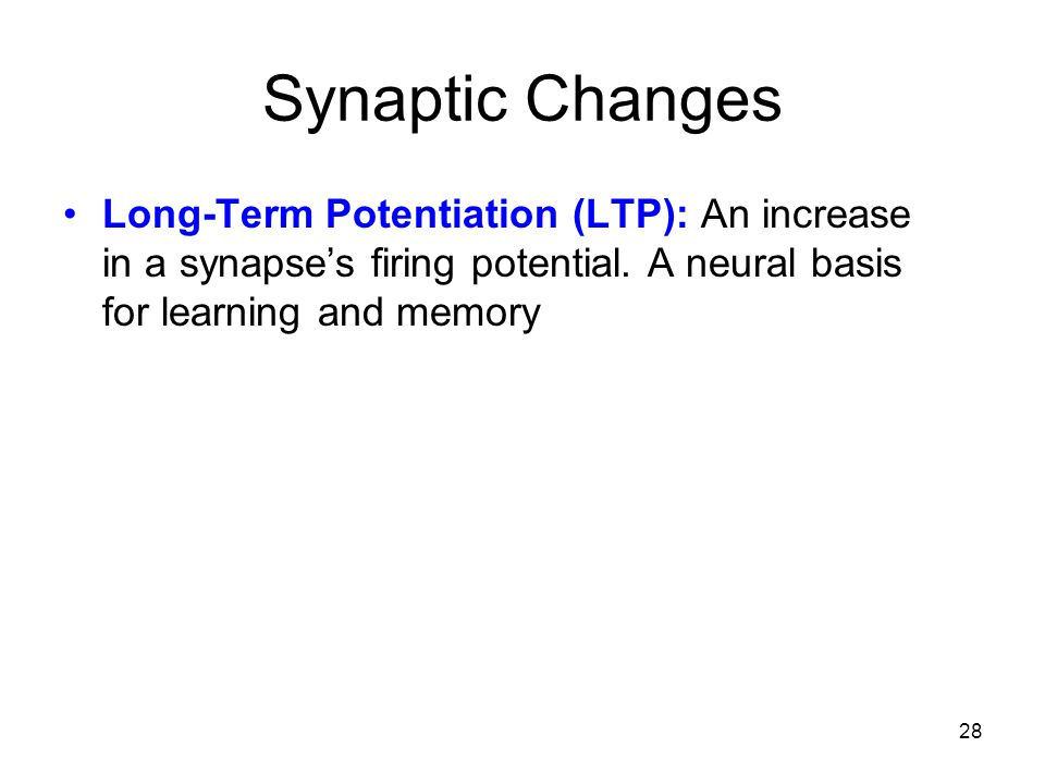 28 Synaptic Changes Long-Term Potentiation (LTP): An increase in a synapse's firing potential. A neural basis for learning and memory