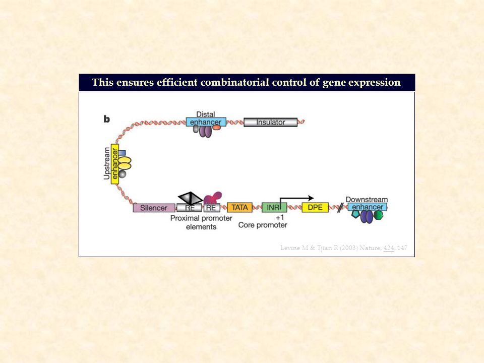 Levine M & Tjian R (2003) Nature, 424, 147 This ensures efficient combinatorial control of gene expression