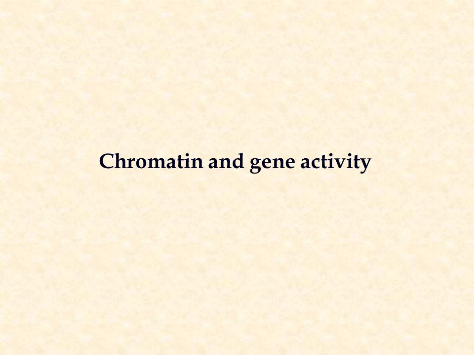 Chromatin and gene activity