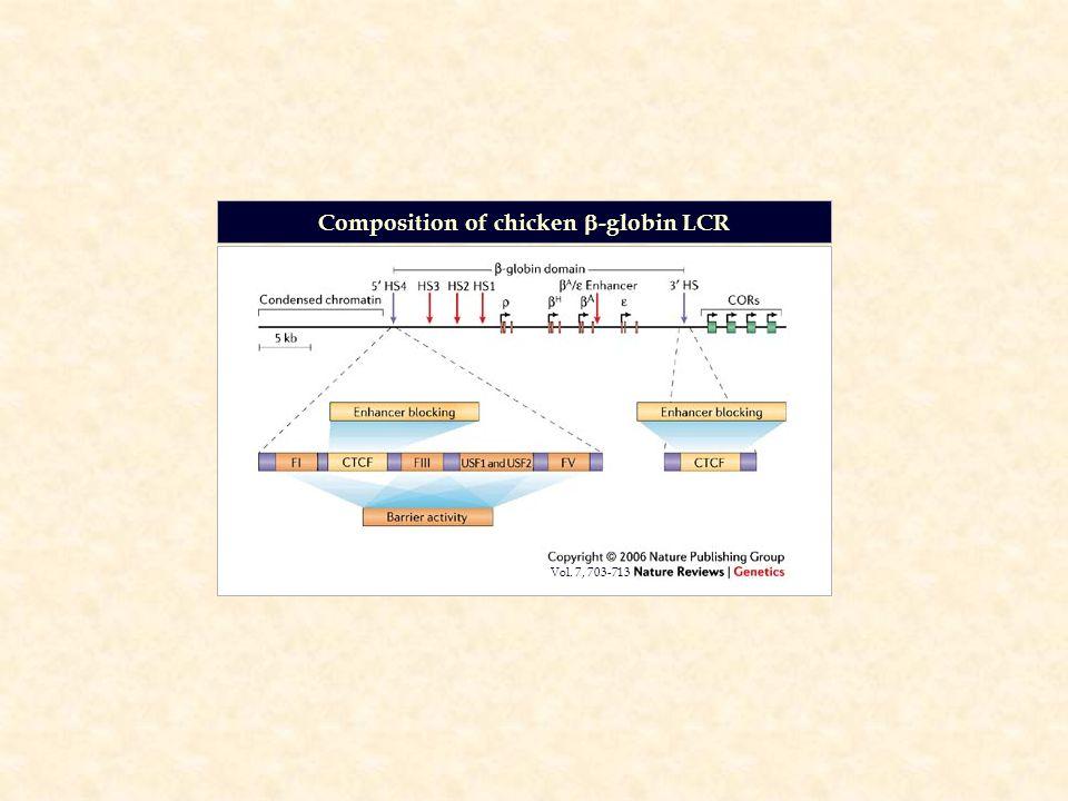 Composition of chicken  -globin LCR Vol. 7, 703-713