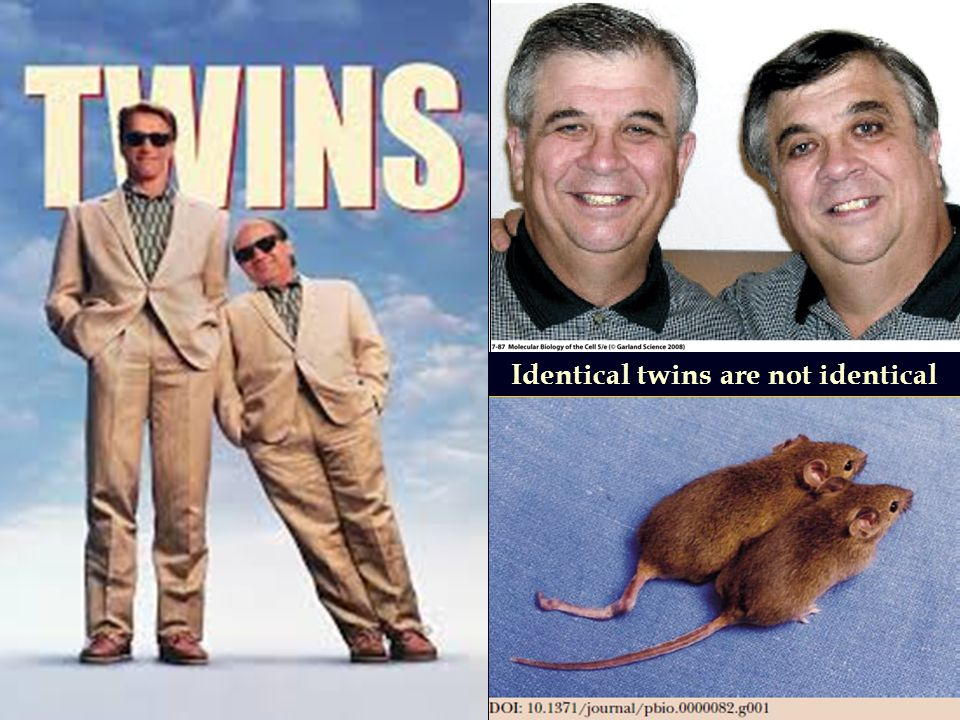 Identical twins are not identical