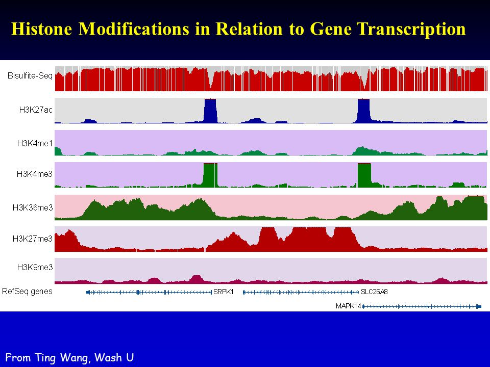 Histone Modifications in Relation to Gene Transcription From Ting Wang, Wash U