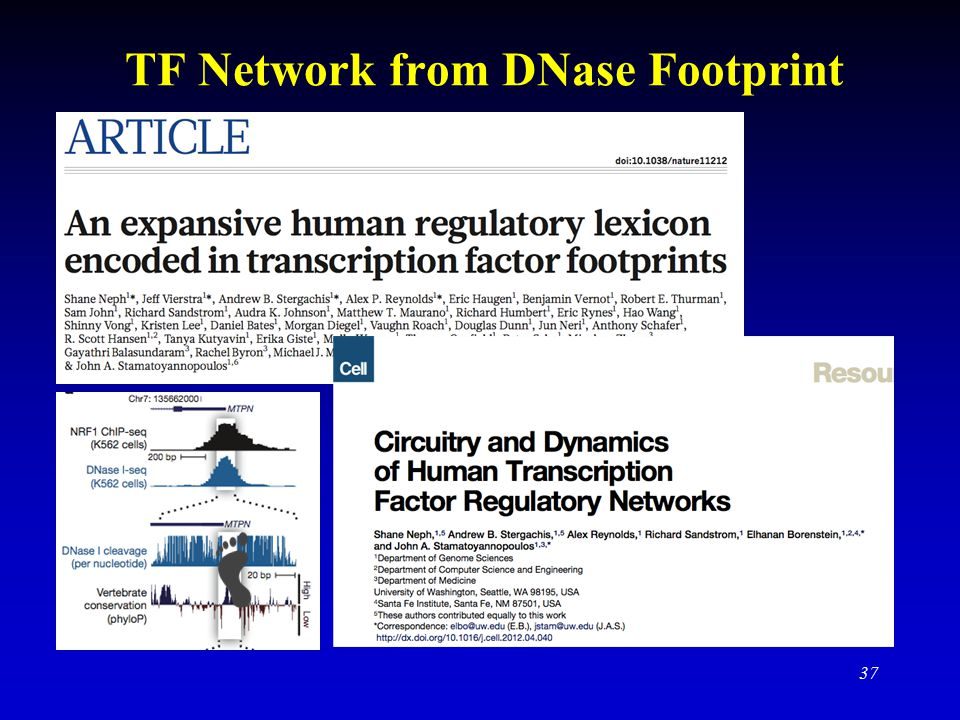 TF Network from DNase Footprint 37