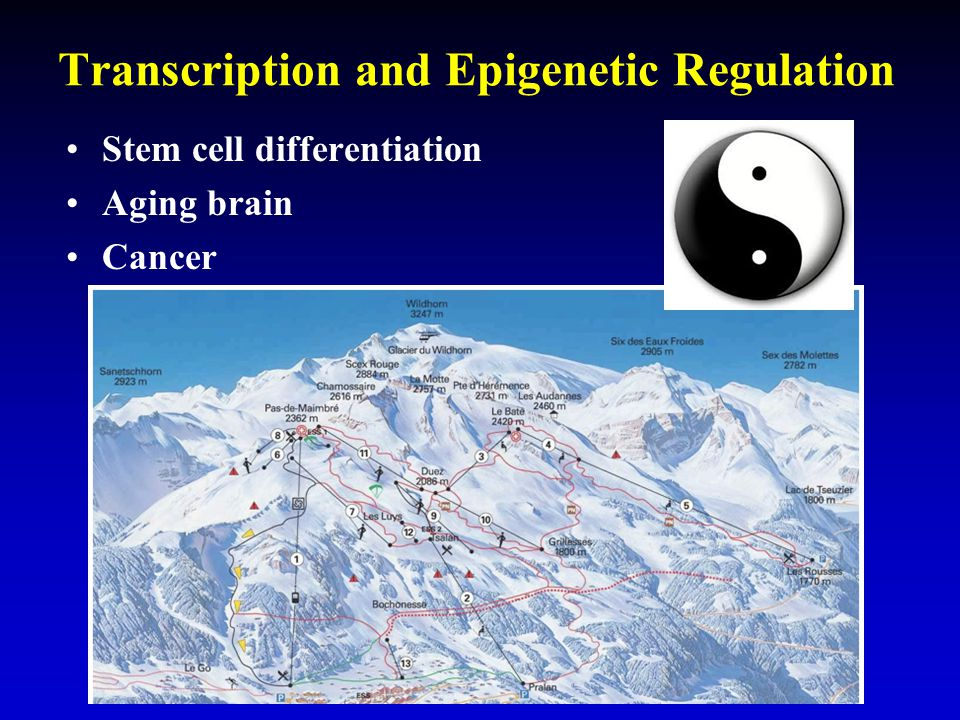 Transcription and Epigenetic Regulation Stem cell differentiation Aging brain Cancer