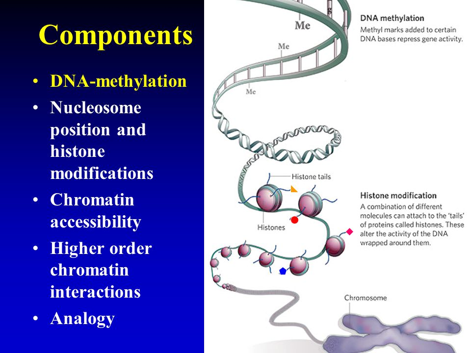 Components DNA-methylation Nucleosome position and histone modifications Chromatin accessibility Higher order chromatin interactions Analogy