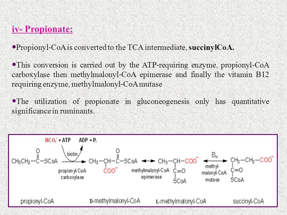 iv- Propionate: Propionyl ‐ CoA is converted to the TCA intermediate, succinylCoA. This conversion is carried out by the ATP ‐ requiring enzyme, propi