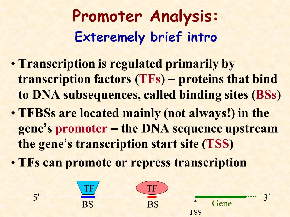 Transcription is regulated primarily by transcription factors (TFs) – proteins that bind to DNA subsequences, called binding sites (BSs) TFBSs are located mainly (not always!) in the gene ' s promoter – the DNA sequence upstream the gene ' s transcription start site (TSS) TFs can promote or repress transcription Promoter Analysis: Exteremely brief intro TF Gene 5'5' 3'3' BS TSS