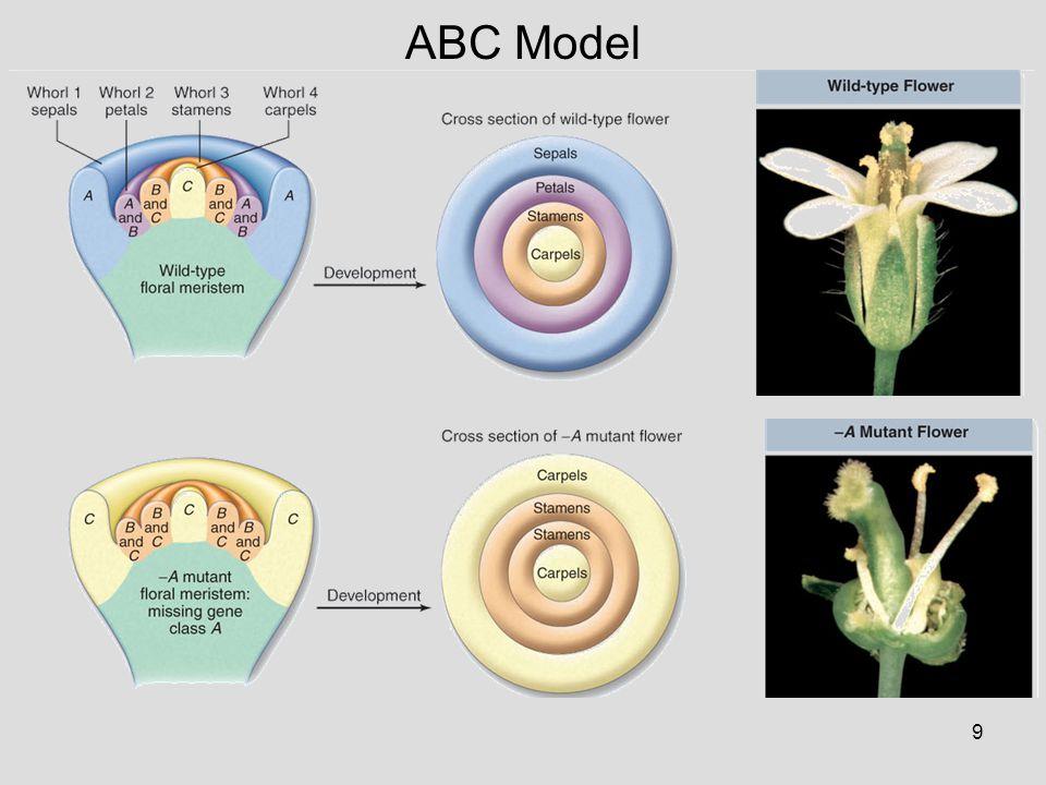 10 ABC Model