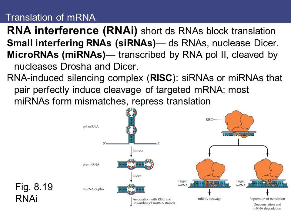 Translation of mRNA RNA interference (RNAi) short ds RNAs block translation Small interfering RNAs (siRNAs)— ds RNAs, nuclease Dicer. MicroRNAs (miRNA