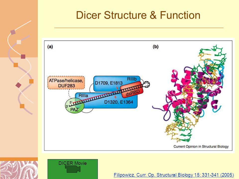 Doug Brutlag 2011 Dicer Structure & Function Filipowicz, Curr.