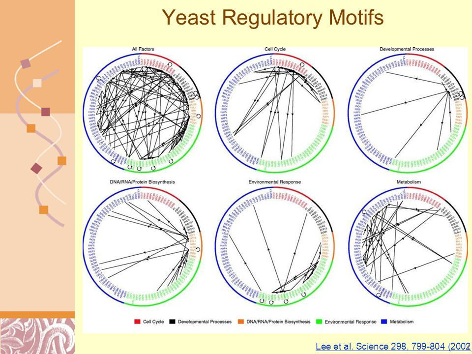 Doug Brutlag 2011 Yeast Regulatory Motifs Lee et al.