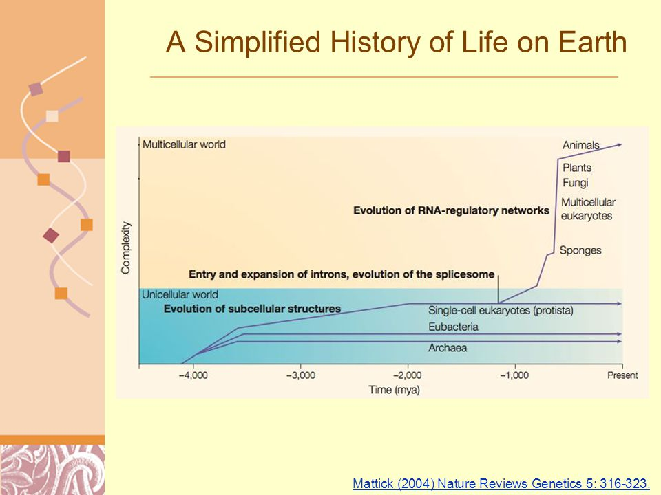 Doug Brutlag 2011 A Simplified History of Life on Earth Mattick (2004) Nature Reviews Genetics 5: 316-323.