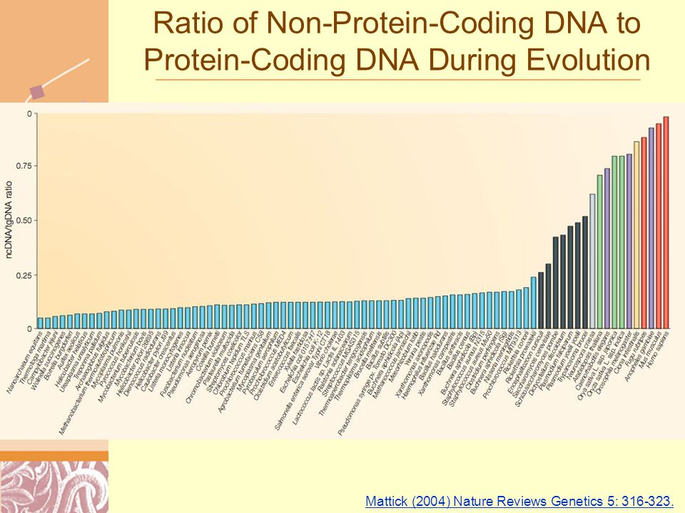 Doug Brutlag 2011 Ratio of Non-Protein-Coding DNA to Protein-Coding DNA During Evolution Mattick (2004) Nature Reviews Genetics 5: 316-323.