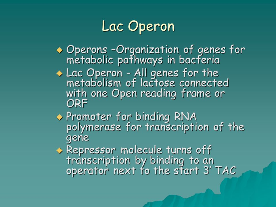 Lac Operon  Operons –Organization of genes for metabolic pathways in bacteria  Lac Operon - All genes for the metabolism of lactose connected with o