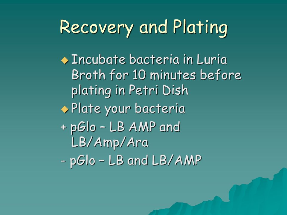 Recovery and Plating  Incubate bacteria in Luria Broth for 10 minutes before plating in Petri Dish  Plate your bacteria + pGlo – LB AMP and LB/Amp/A