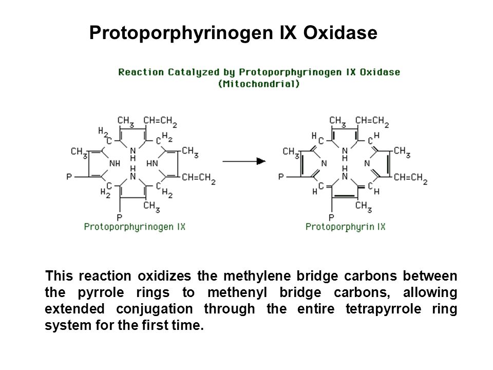 Protoporphyrinogen IX Oxidase This reaction oxidizes the methylene bridge carbons between the pyrrole rings to methenyl bridge carbons, allowing exten