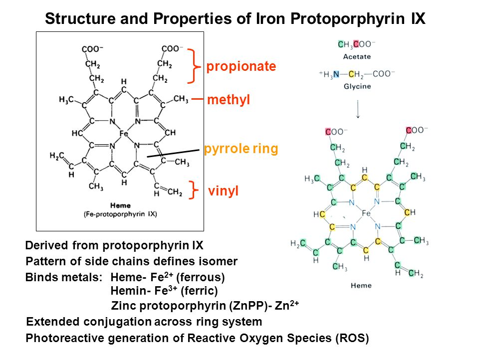 Derived from protoporphyrin IX Binds metals: Heme- Fe 2+ (ferrous) Hemin- Fe 3+ (ferric) Extended conjugation across ring system Photoreactive generation of Reactive Oxygen Species (ROS) Zinc protoporphyrin (ZnPP)- Zn 2+ Pattern of side chains defines isomer Structure and Properties of Iron Protoporphyrin IX propionate methyl vinyl pyrrole ring