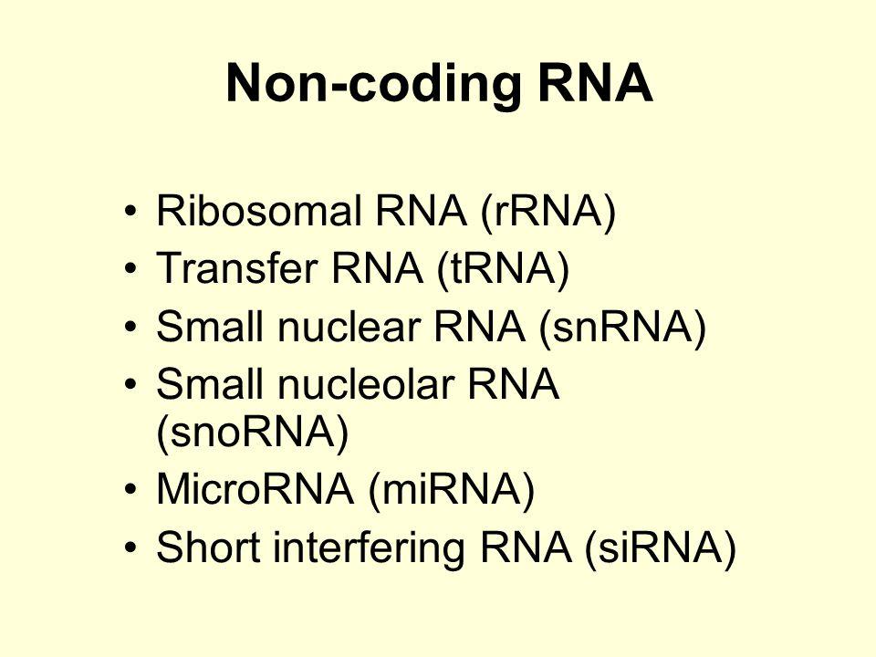 Non-coding RNA Ribosomal RNA (rRNA) Transfer RNA (tRNA) Small nuclear RNA (snRNA) Small nucleolar RNA (snoRNA) MicroRNA (miRNA) Short interfering RNA