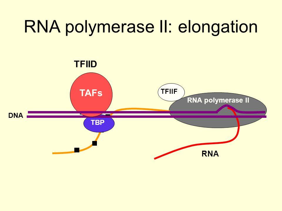 RNA polymerase II TFIIF TATA RNA RNA polymerase II: elongation TBP DNA TAFs TFIID