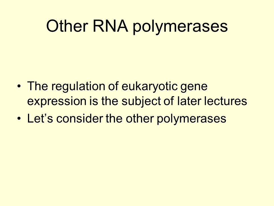 Other RNA polymerases The regulation of eukaryotic gene expression is the subject of later lectures Let's consider the other polymerases