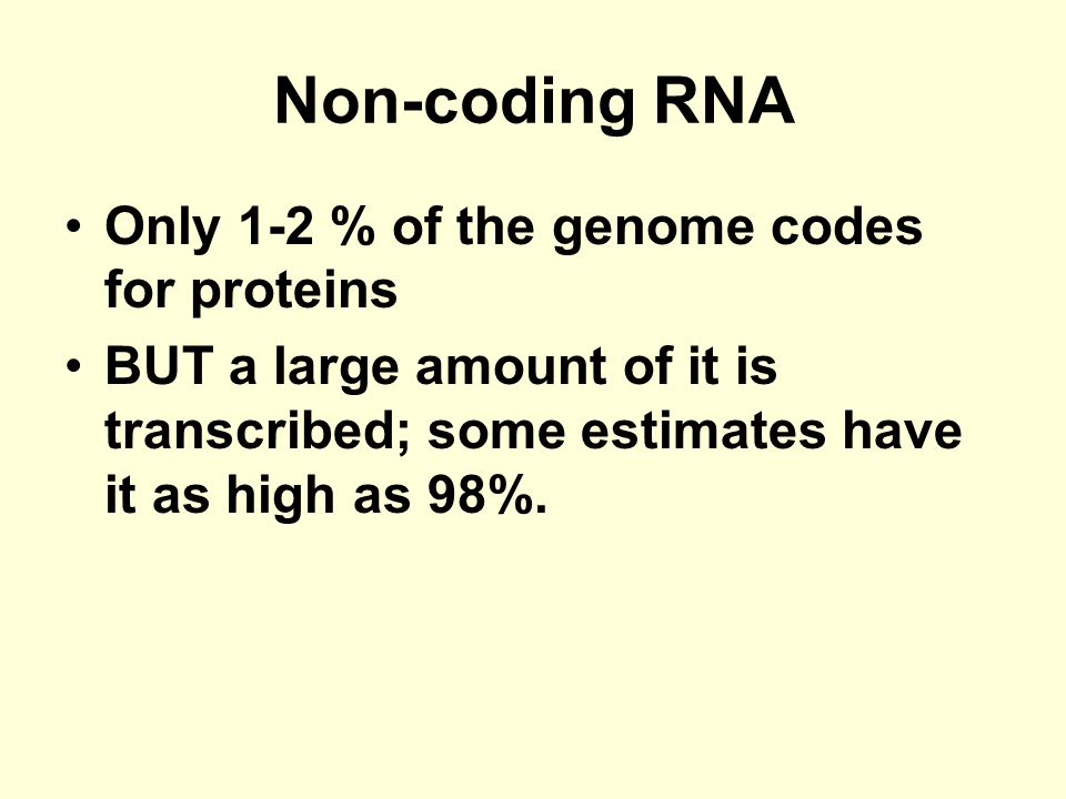 Non-coding RNA Only 1-2 % of the genome codes for proteins BUT a large amount of it is transcribed; some estimates have it as high as 98%.