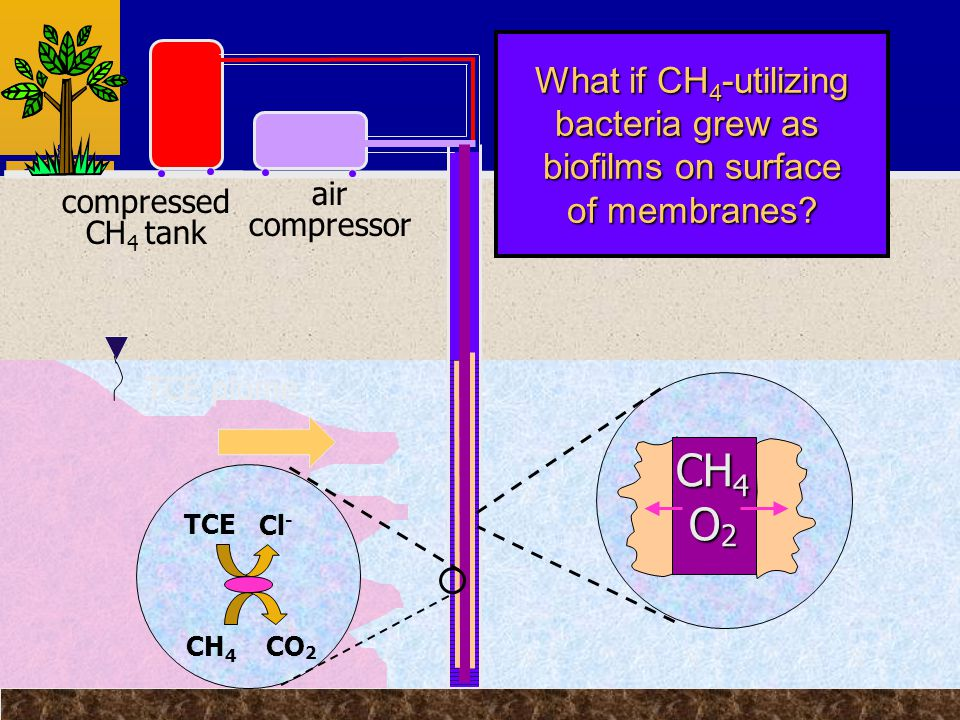 TCE plume compressed CH 4 tank air compressor What if CH 4 -utilizing bacteria grew as biofilms on surface of membranes.