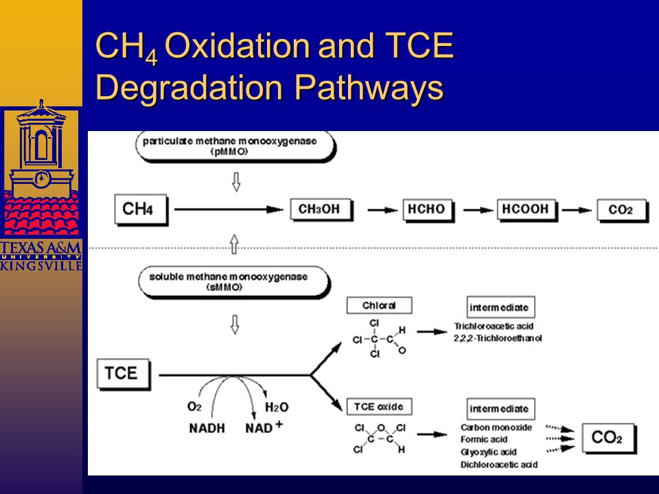 CH 4 Oxidation and TCE Degradation Pathways