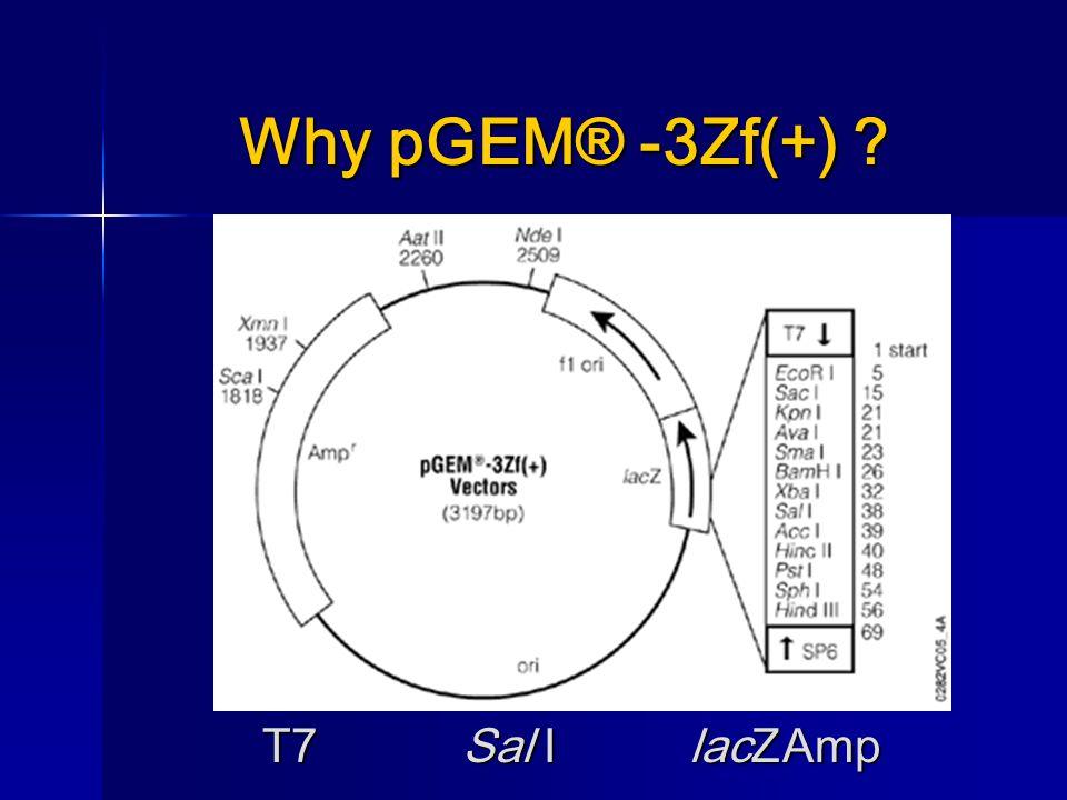 Why pGEM® -3Zf(+) T7Sal I lacZAmp T7Sal I lacZAmp